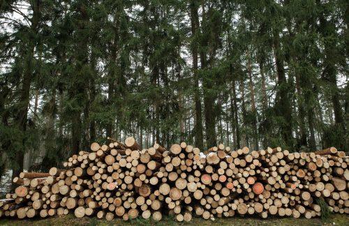 Der Wald – Ausreichender Schutz, effiziente Nutzung