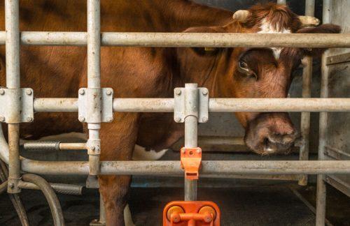 """""""Über kurz oder lang wird der Tierbestand zum Klimathema"""""""