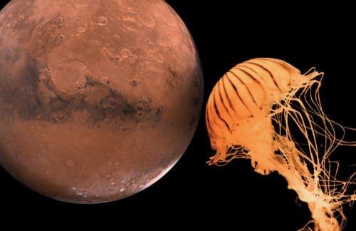 Die Lektion der Marsmenschen