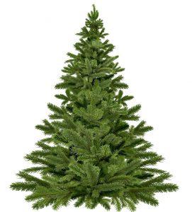 Echter Weihnachtsbaum, Quelle: Maciej Szewczyk/Pixabay