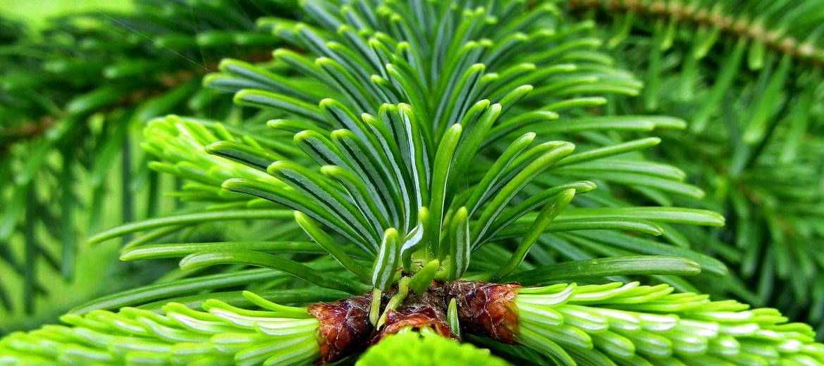 Öko-Weihnachtsbaum, Quelle: s-ms_1989/Pixabay