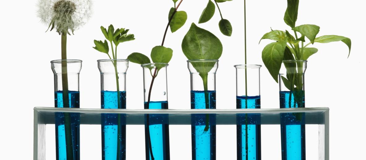 Die deute Wasserstoffstrategie muss erneuerbare Energien verwenden. Quelle: Plainpicture, Öko-Institut