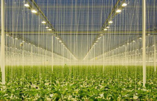 """EU-Agrarpolitik: Endlich die """"Förderpraxis der Zerstörung"""" ändern"""