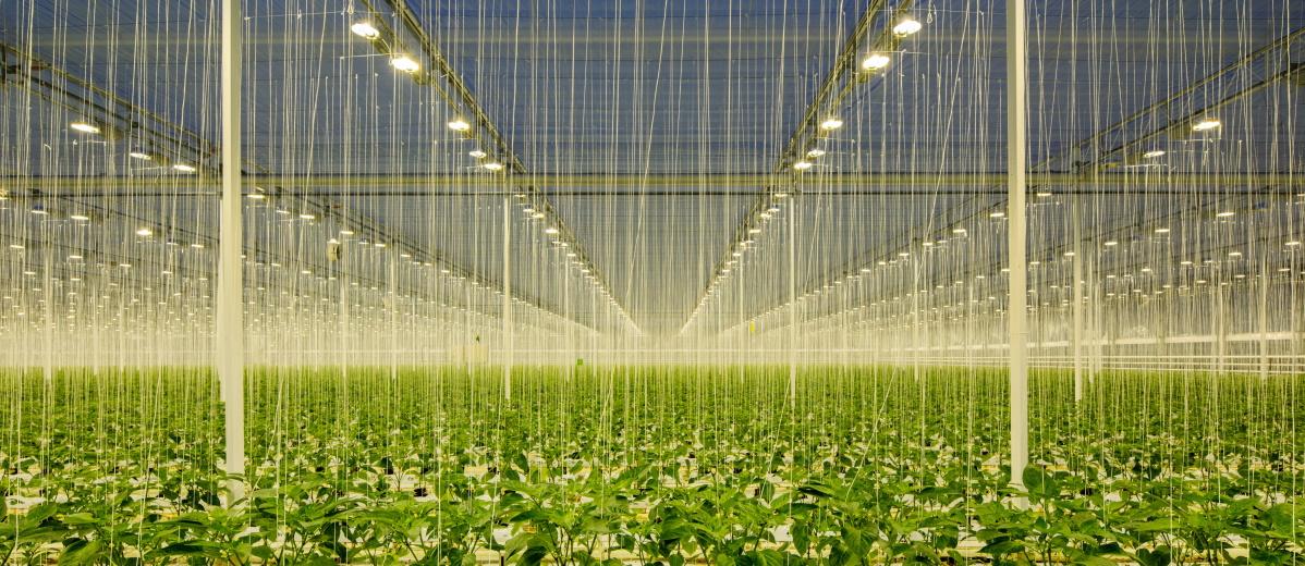 Die EU-Landwirtschaftssubventionen werden reformiert. Aber bitte nachhaltig! Quelle: Plainpicture