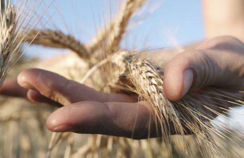 Nachhaltige Bauernregeln zum Globalen Klimastreik