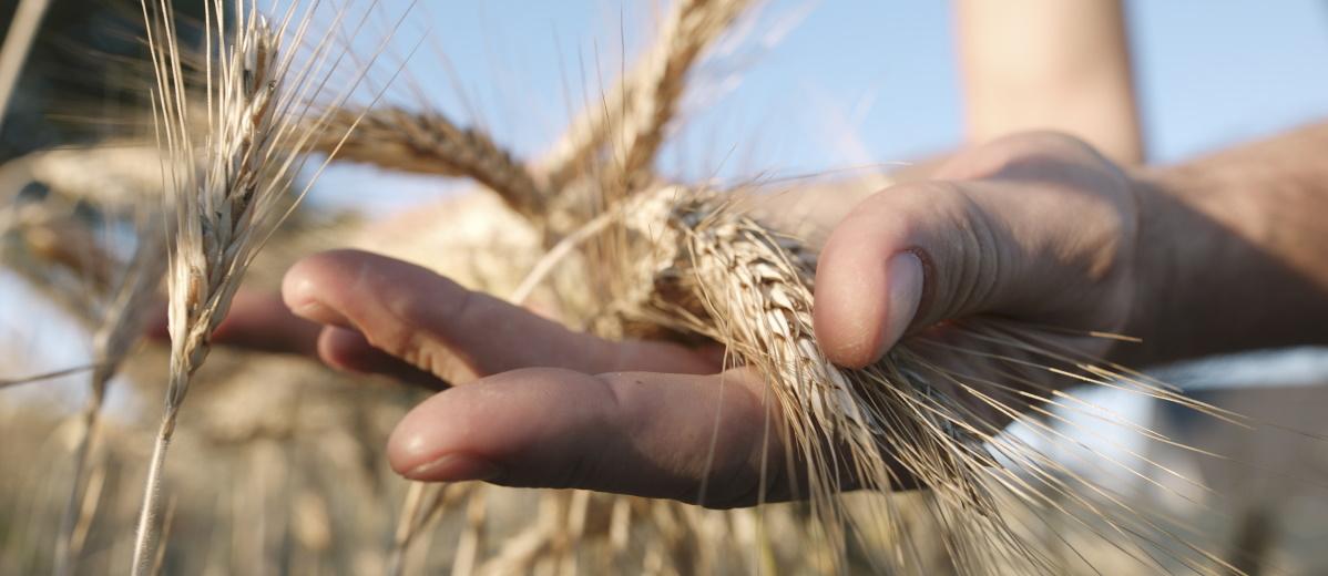 GAP nachhaltig gestalten: neuer Gesellschaftsvertrag vonnöten, Quelle: Plainpicture